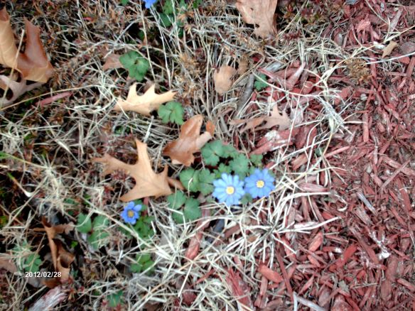 spring daisy 2012