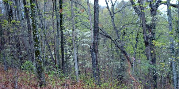 spring ridge 2