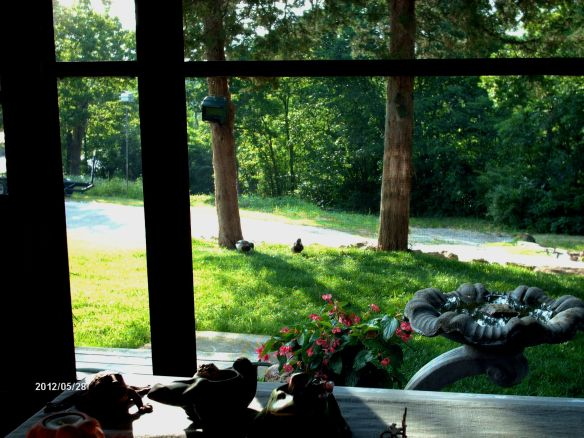 Morning Porch View