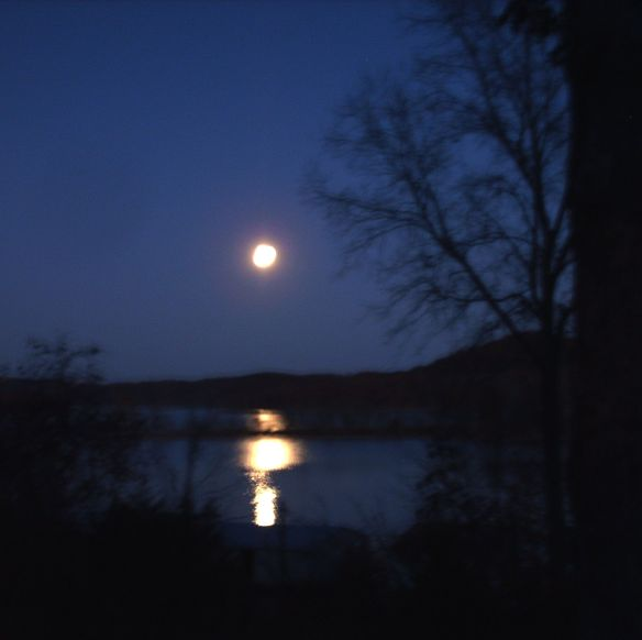 Moonlight on Cove