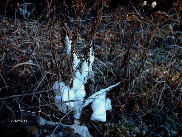 Frost flowers 3