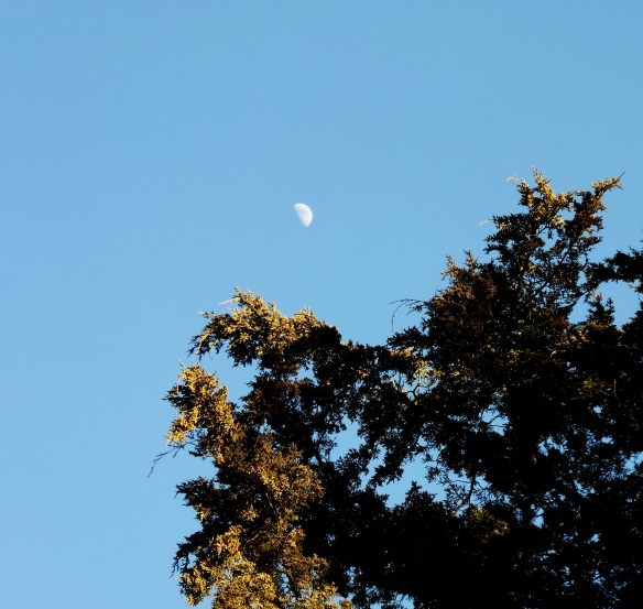 Moon in the Afternoon