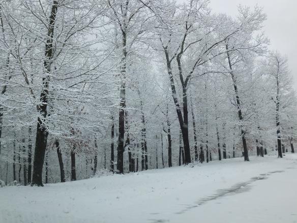 Feb morning snow 2