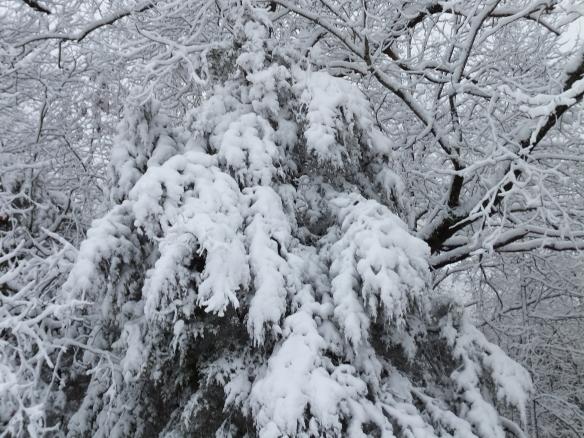 Feb morning snow 3
