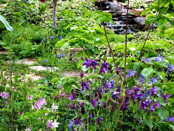 May Garden 2013
