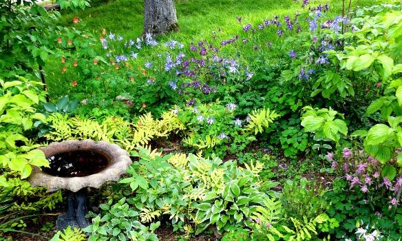May Garden 3 2013
