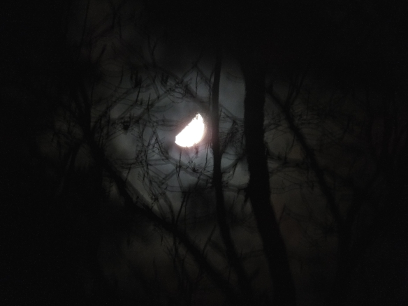 moon in the trees