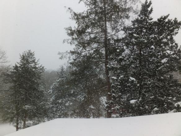 snow Dec 2013 1