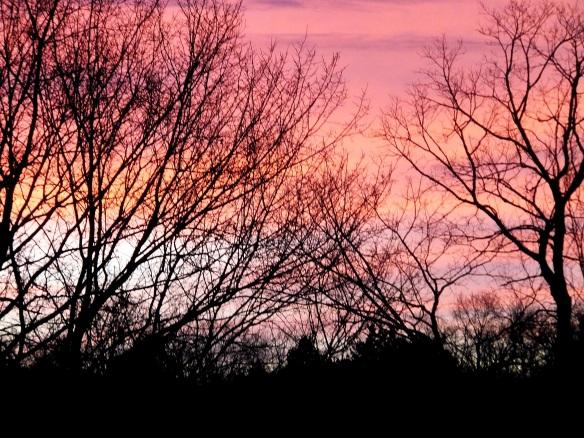 January morning 2014