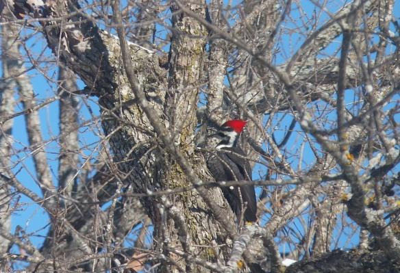 Woodpecker 2014