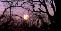 morning moon 2-2014