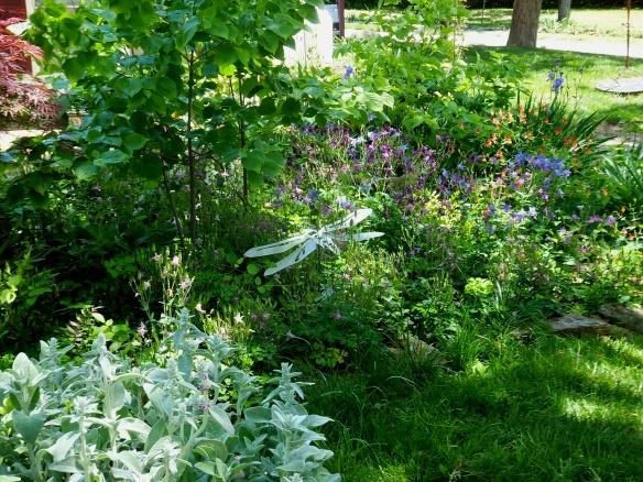 Dragonfly garden 5-18-14