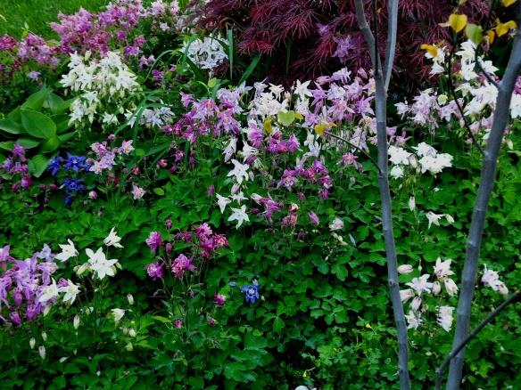 Fairie garden 2014