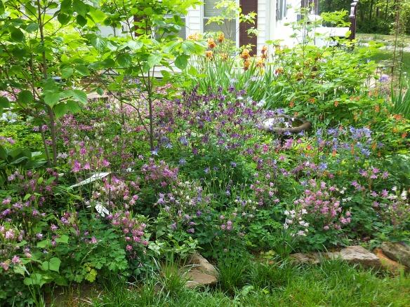 Garden in May 2014