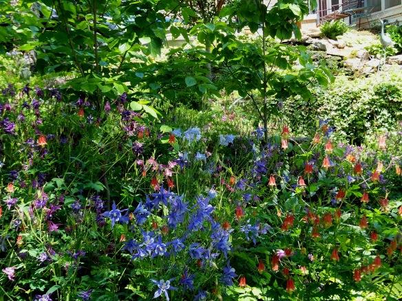 May Garden 2 5 18, 2014