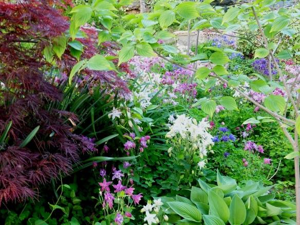 May garden 3 2014