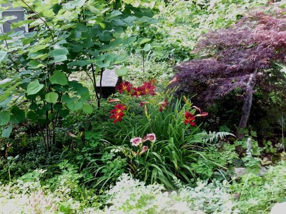 June Daylilies 2