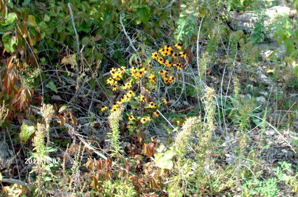 fall - flowers2