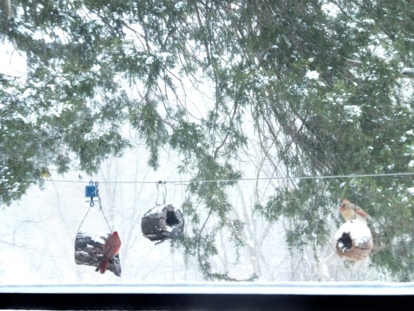 snowy morning with cardinals