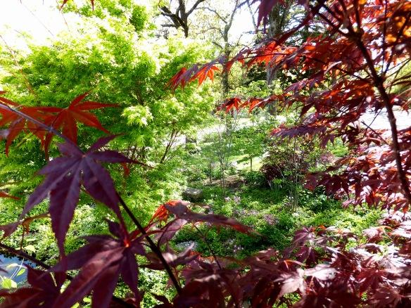 April garden 2015