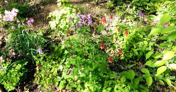 April garden 6 2015