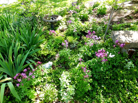 April garden 7 2015
