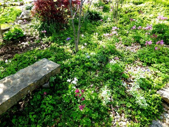 April garden 8 2015